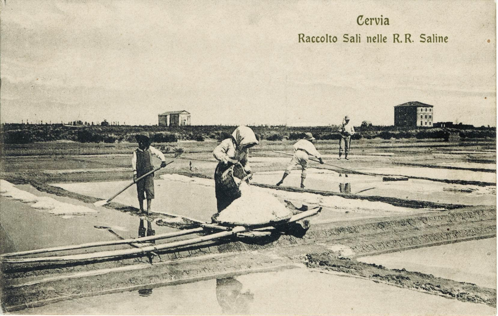 1908.Cervia. Raccolta sali nelle R.R. saline.