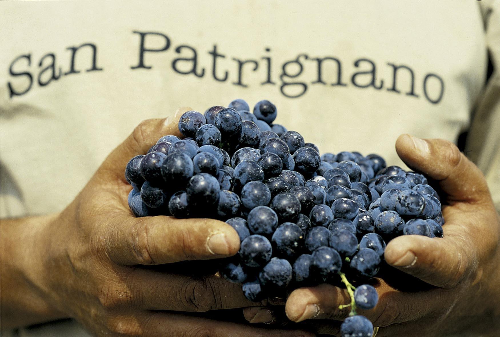 Uva da vino di San Patrignano