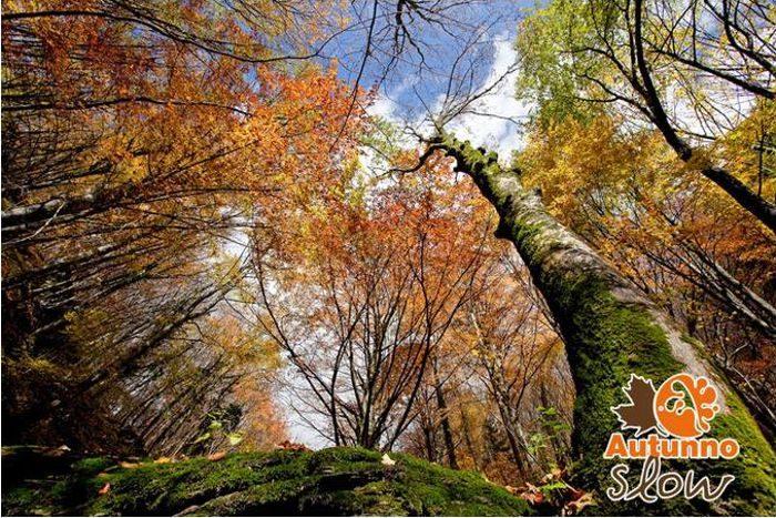Autunno slow - Foreste Casentinesi