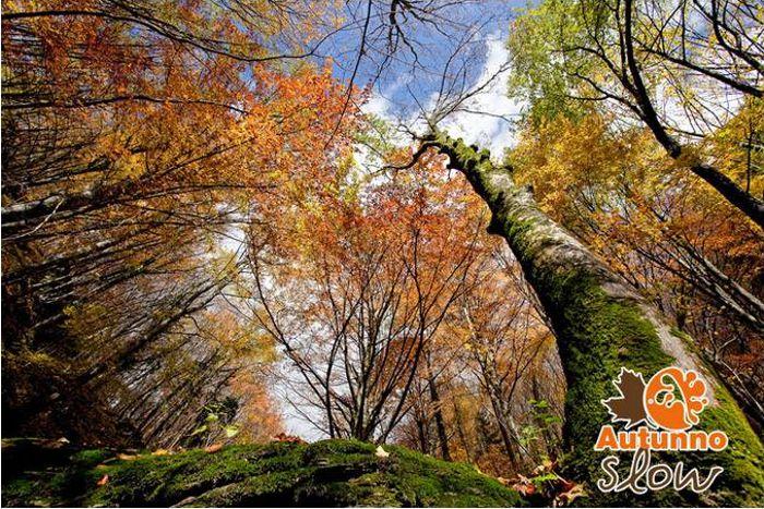 Parco Nazionale della Foreste Casentinesi
