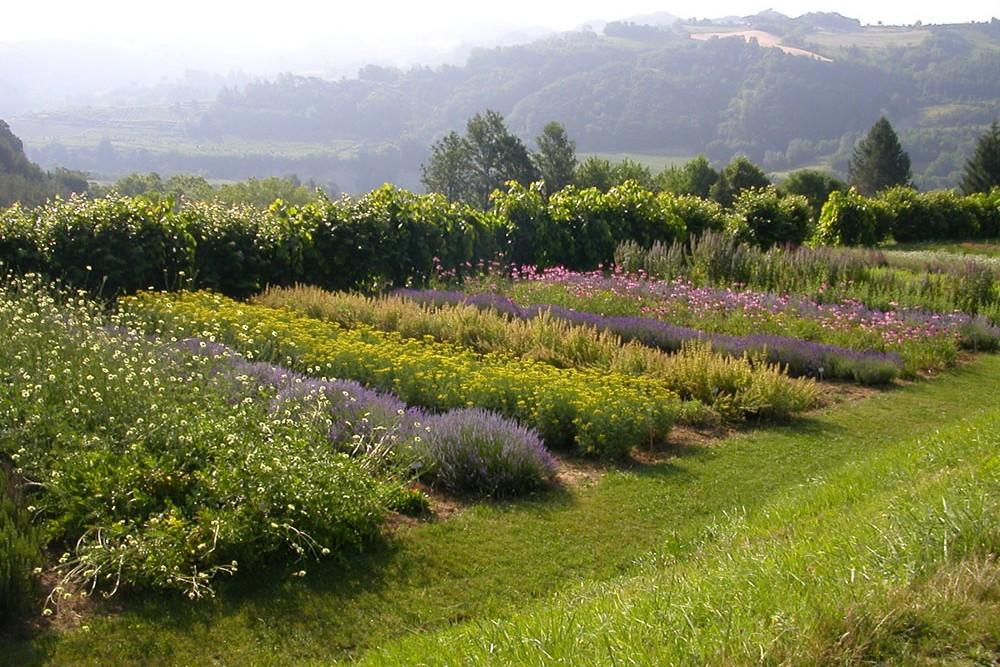 Giardino delle Erbe | Casola Valsenio