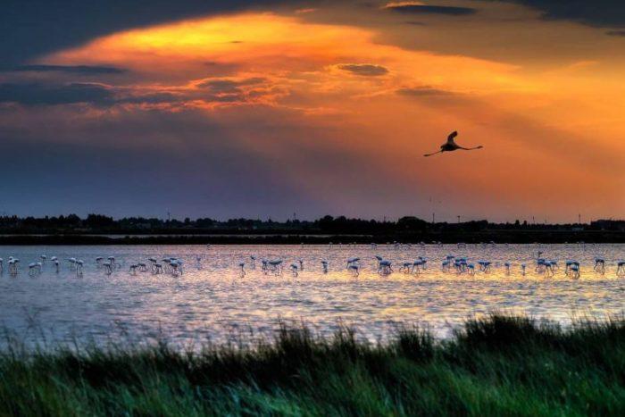 Saline di Cervia al tramonto