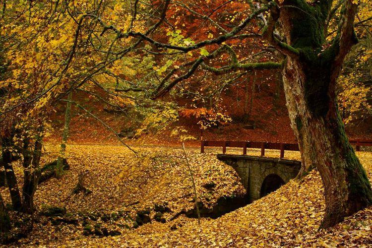 Percorsi e sentieri a bagno di romagna romagna a tavola news - Parco laghi bagno di romagna ...