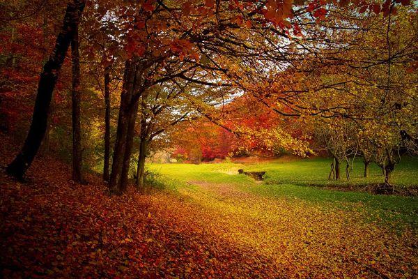 Fall Foliage Festival - Bagno di Romagna
