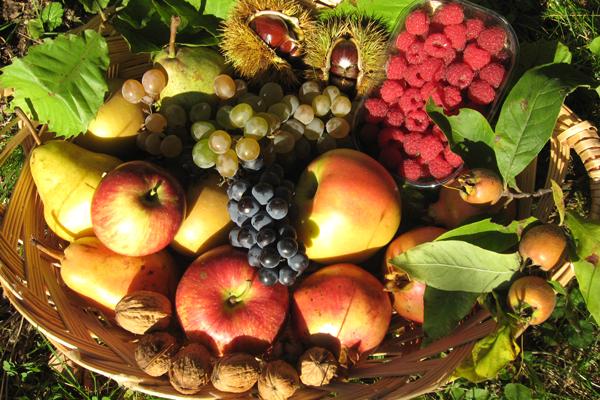 Sagra dei frutti del sottobosco - Portico di Romagna