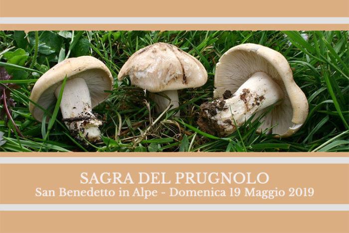 Sagra del Prugnolo - San Benedetto in Alpe